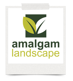 Testimonials about one bright spark from Angela Watts, Amalgam Landscape